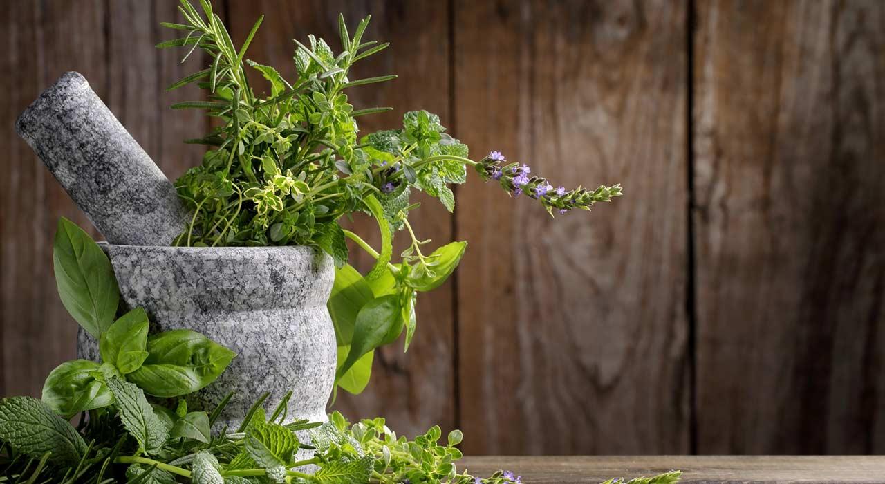 Der Gemüsegarten Im Schatten Welche Nutzpflanzen Gedeihen Mit Wenig