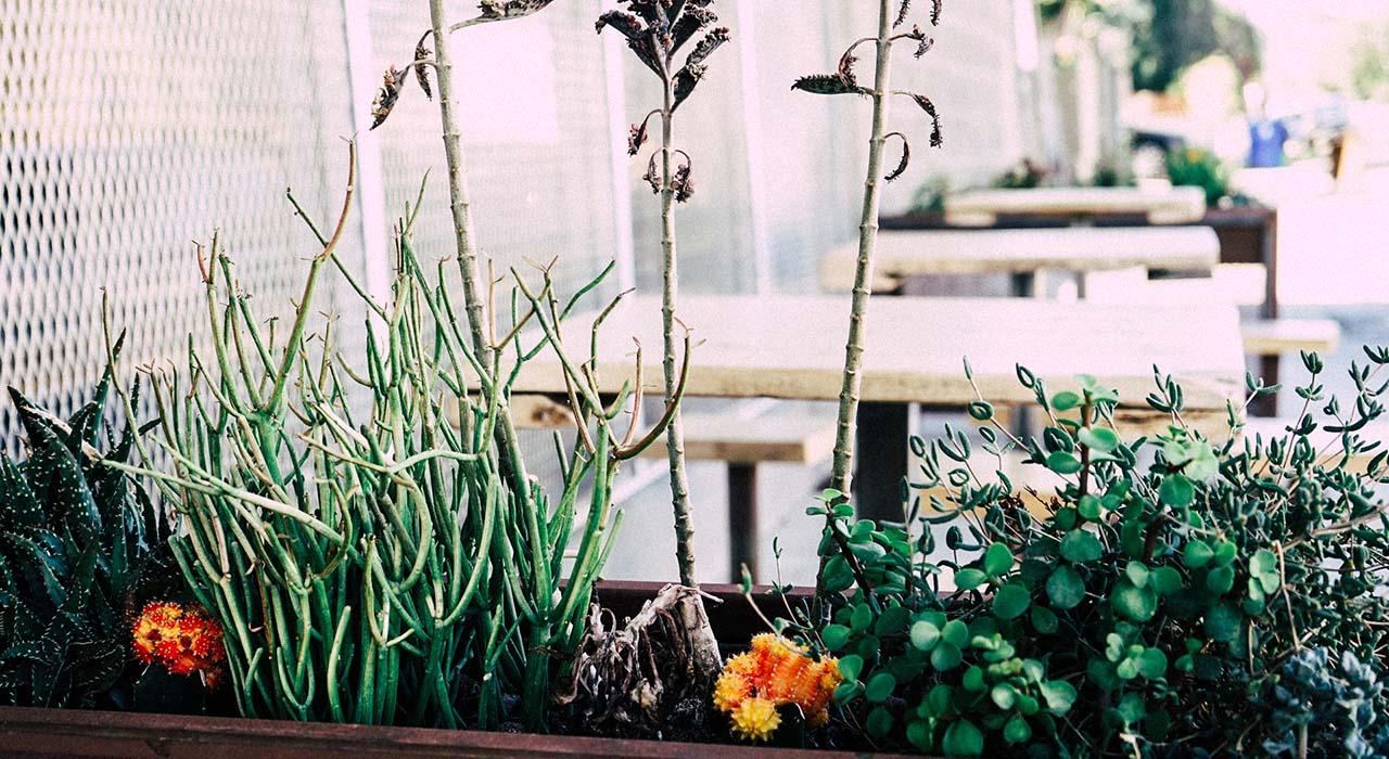 Zimmerpflanzen Ohne Licht 6 altbewährte pflegetipps für glückliche zimmerpflanzen ratgeber