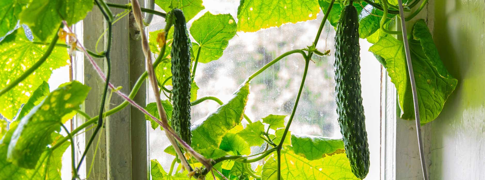 vertical gardening wie man gem se in der wohnung ziehen kann ratgeber magazin tipps von. Black Bedroom Furniture Sets. Home Design Ideas